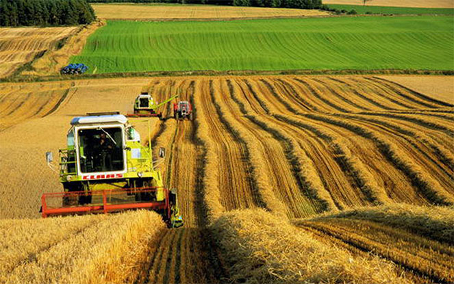 Фермерское дело